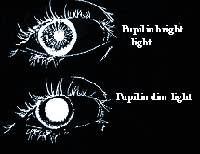 riflesso pupillare